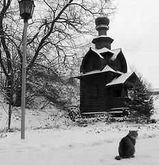 Happy New Year my dear friends! photo by svetlana1961(very busy)