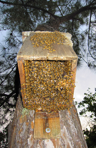 Bees in the bird house