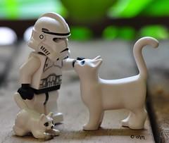 Star Wars Lego Clone Trooper and Clone Kitties photo by KatanaZ