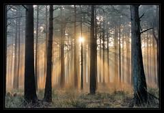 Rhinefield (New Forest) Sunrise photo by paulinuk99999