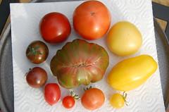 Tomato Growers Quiz #1