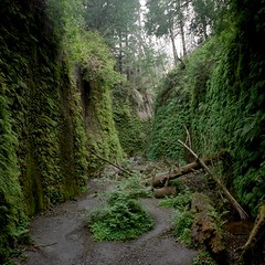 Fern Canyon photo by peterbaker