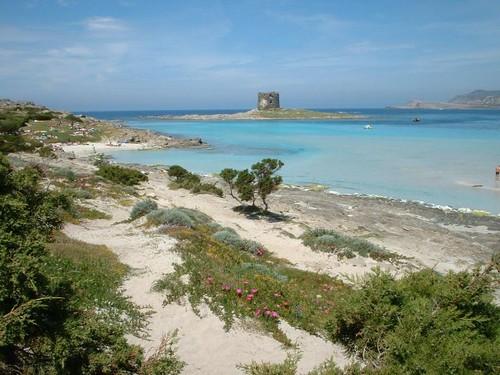 Stintino (Sardegna): si può fare qui una Silicon Valley?