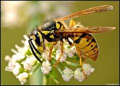"""...""""Insect""""... photo by Claudio Gennari ...""""Cogli l'attimo ferma il tempo"""""""