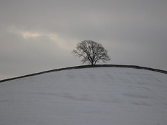 Just a tree photo by Lune Rambler