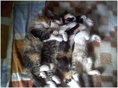 Sleeping photo by Valealarconn