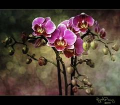 Orquídeas photo by kypt@nuy ~ very busy!!!