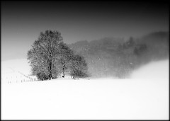 Winter photo by NPPhotographie