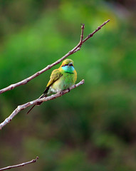 Green Bee Eater Series - Explored photo by frozen stills