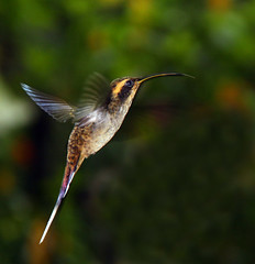 Os menores pássaros do mundo! photo by Miriam Cardoso de Souza