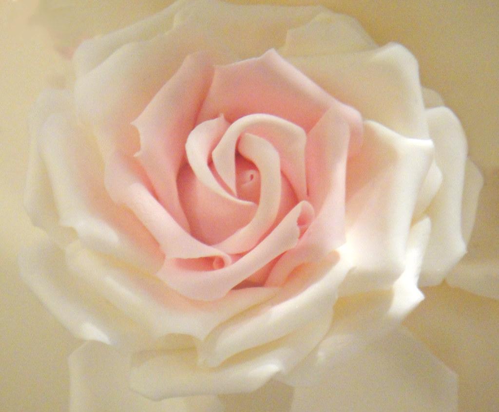 Rose1 photo by Vanilla Cake Shop