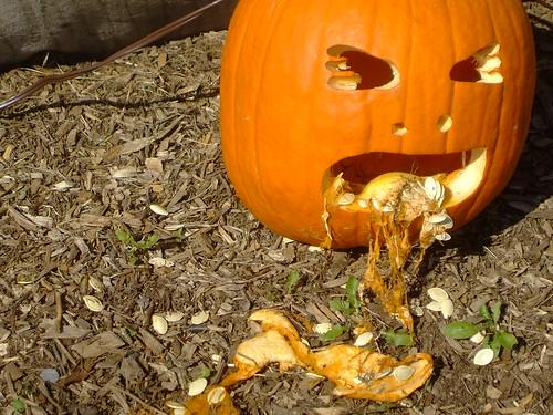 The vomiting pumpkin