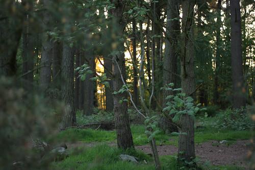 Carnie Wood, Elrick