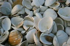Got shell?