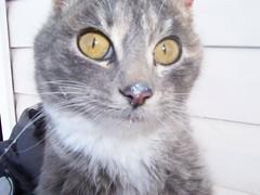 Elsie's Cat
