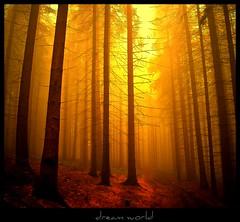 Nebelweg nach Hömel - dream world photo by NPPhotographie
