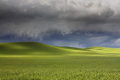 Green Rolling Hills - Palouse, Washington photo by Will Shieh