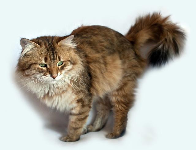 dandruff cats fur