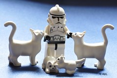 Star Wars Lego Clone Trooper and Clone Kitties photo by KatanaZ