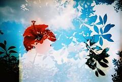 Film swap #2 photo by popoandrew