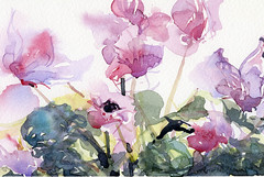 Cyclamen: Watercolour & Brush photo by skyeshell