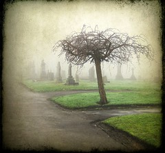 Misty Cemetery photo by vesna1962