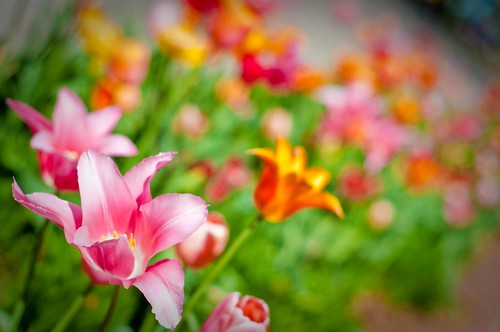 gratz park flowers