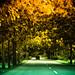 Autumn in Perlis?