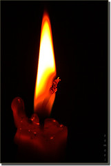 Candles photo by seyed mostafa zamani