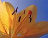 4457319094_ffd594cd59_t