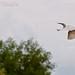 Angke Kapuk bird