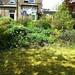 Garden Before VII