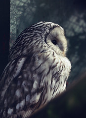 Owl photo by FSGPhotography