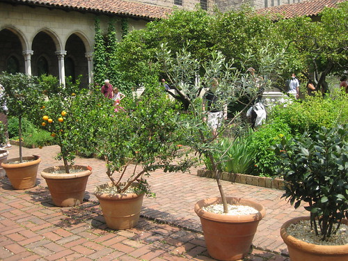 Dwarf Avocado Tree http://thepottedvegetablegardener.wordpress.com/tag/dwarf-avocado-trees/