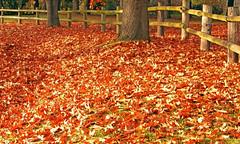 Fall Back photo by Ian Sane