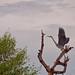 Kapuk Angke Bird