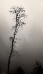 Barren Tree photo by Patrick Stanbro