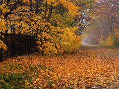 مسیر زرد (Yellow Mile) (Explored) photo by Cna1_10