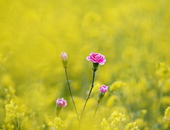 Delicate Feeling photo by ♥ Spice (^_^)