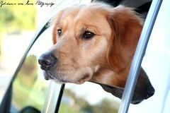 Dogs are miracles with paws. ~Susan Kennedy photo by Golden Moments Petography
