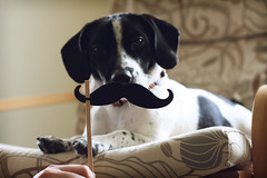 Dog with a Mustache photo by ginnerobot