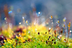 macro world photo by coral staley-hall
