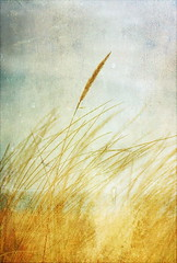 Sea Grass - EXPLORED photo by Beccy Melling