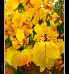 Yellow photo by seyed mostafa zamani