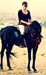 "Black Horse photo by AL.Z.BARA""07●~حبــك ســراب"