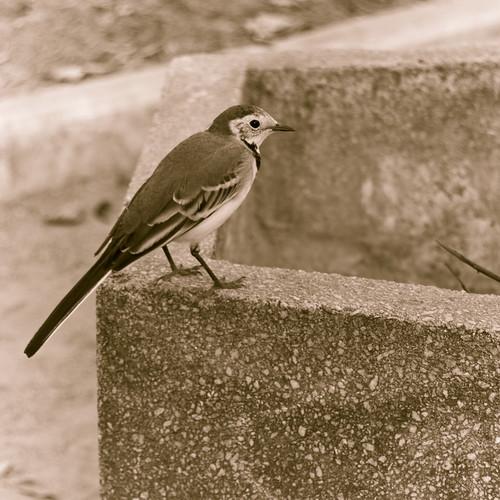 птичка-2_новый размер