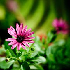 heavenly garden photo by docworld