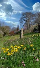 Springtime photo by Markhenderson81