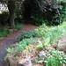 Garden Before III
