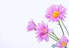 4804120111_edaede78a2_t